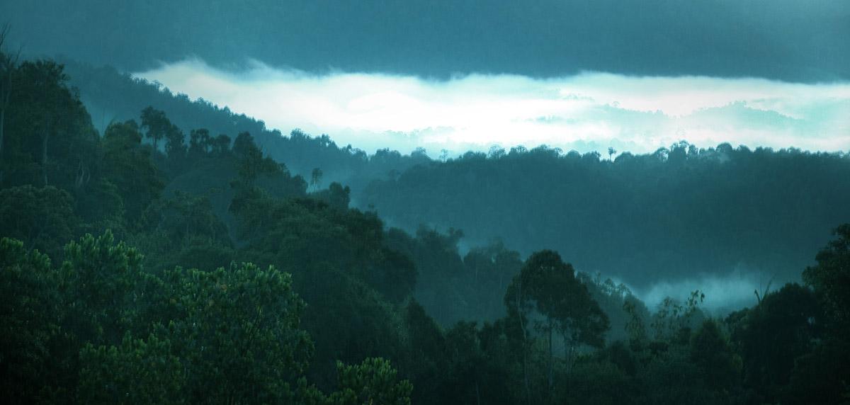 BOH Plantations, Malaysia
